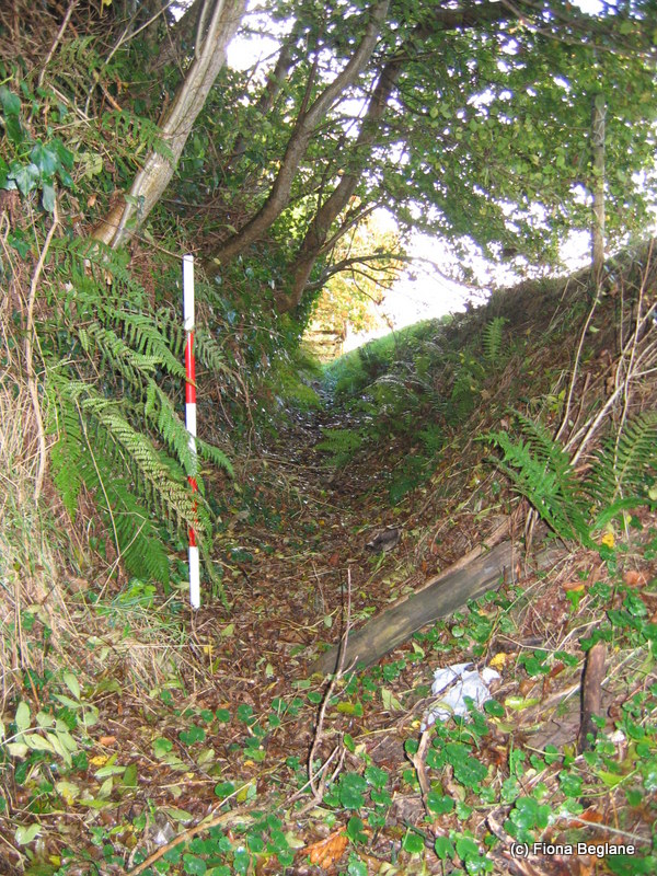 The ditch forming the southern park boundary at Carrick   Co. Wexford