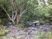 Rag tree at Tobermacduagh