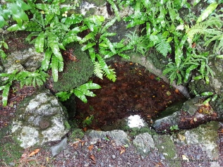 Stone with depression said to be the spot where St Patrick knelt at at Tobar Phadraig Monivea.
